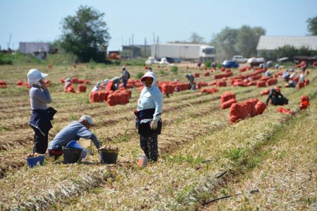 О региональных грантах для астраханских фермеров